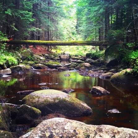 Exploring Brook Trout streams leads to places like this...