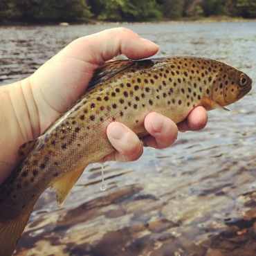 East Canada Brown