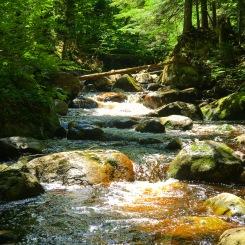 Adirondack Pocket Water full of Brookies