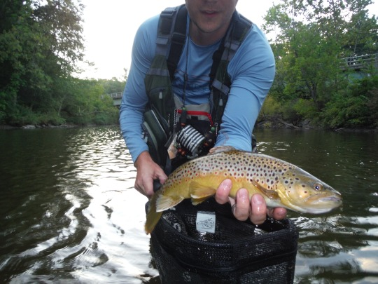 Butter Belly Brown from the Battenkill. Say that 5 times fast...