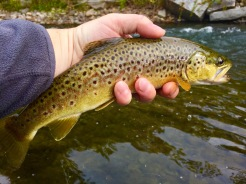 Purdy Little Brown