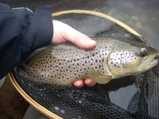 Big Brown from the Battenkill